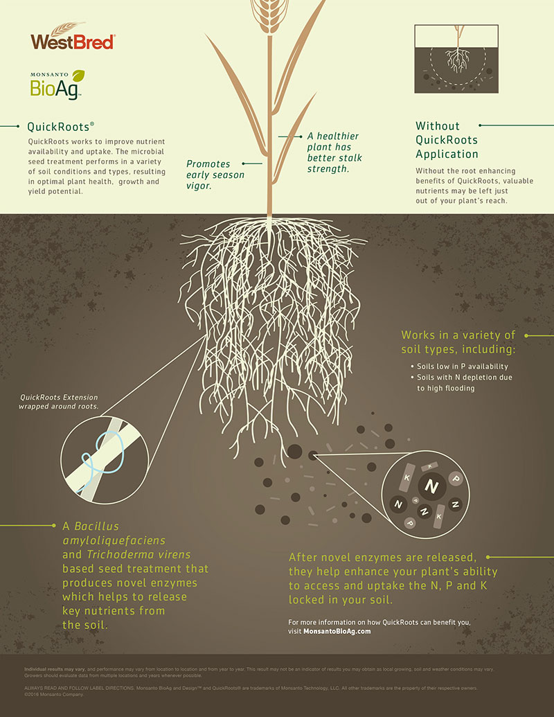 QuickRoots Infographic